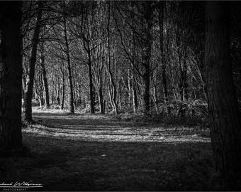 Landscape, Photography, Silent Valley, Northern Ireland, Woods, Black and White, Fine Art, Photo, Print, 5x7, 8x12, 12x18, Jigsaw
