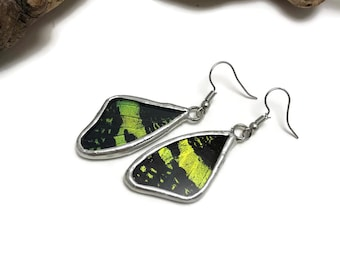 Real Butterfly earrings, butterfly, insect jewelry, handmade, Sunset moth Earrings, butterfly jewelry, butterly wing, Urania riphaeus