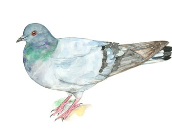 Pigeon watercolor painting - bird watercolor painting - 5x7 inch print - 0022