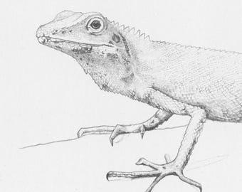 Lizard_- Original Pencil Drawing, wildlife art
