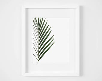 Palm Frond Minimalist Print - Instant Download - Photography Print