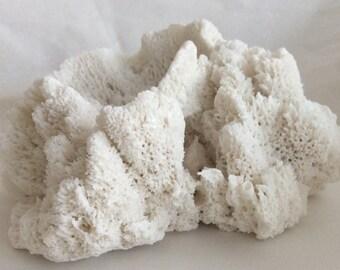 Reef Coral Porcelain Artwork - Organic Porcelain Sculpture - Unique Handmade 3D Wall Tile - Specimen Artwork - Coastal Interiors Centrepiece