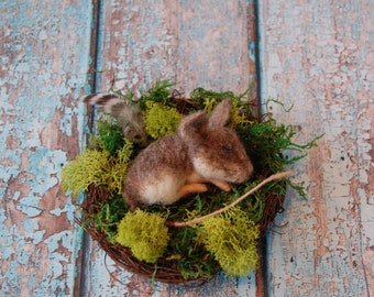 Needle Felted Sleeping Mouse in Moss Nest ~ Wool Animal Art Sculpture ~ Nature Decor