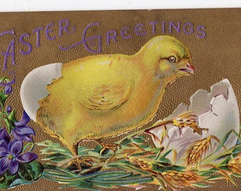 Easter Postcard, chick with shell on rear,  vintage post card, Easter chick antique postcard