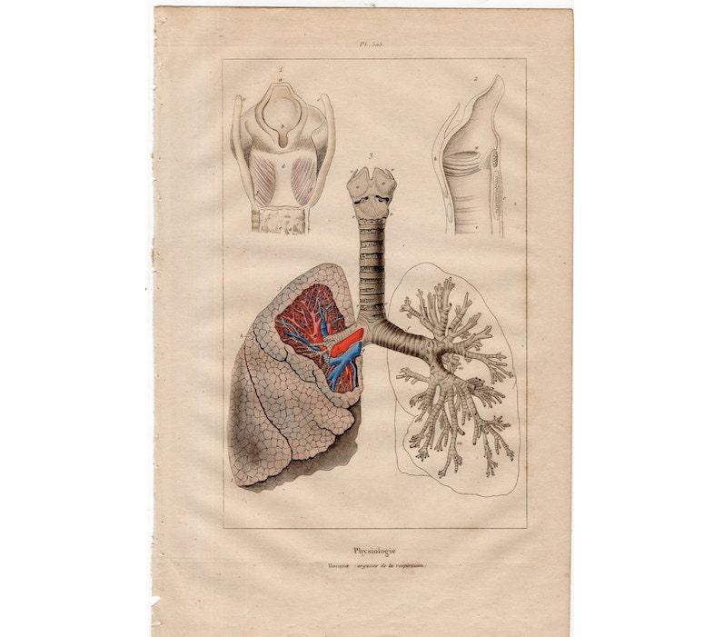 Ziemlich Die Anatomie Des Atmungssystems Bilder - Menschliche ...