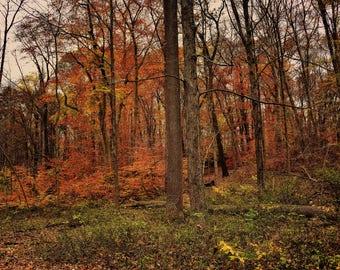 Autumn Woods, Autumn, Fall, Fall Colors, Fall Print, Autumn Print, Tyler State Park, Woods, Woodland, Photography, Print, Canvas, Wall Art