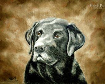 Black Labrador Retriever in Pastels