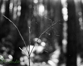 Morning web