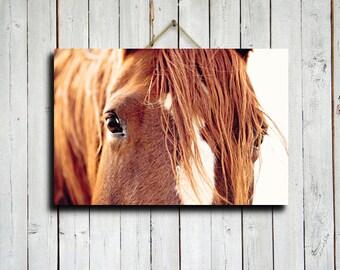 """Horses Eyes - 16x24"""" canvas print - Horse eyes decor - Horse decor - Horse photography - Horse art - Horse eyes art"""