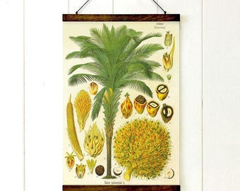 Pull Down Chart, Palm Tree Botanical, Educational Chart Diagram, Tropical Decor, Vintage Style, Tropical Style, 20x27