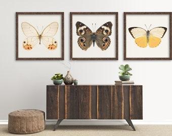 Butterfly Print Set, Living Room Decor, Set of 3 Prints, Butterfly Wall Art, Bedroom Decor, Wall Art Print Set of 3, Butterfly Art Set