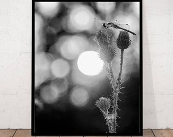 Dragonfly Print, Dragonfly Photography, Black and White Photography, Modern Photography, Dragonfly Decor, Dragonfly Wall Art, Dragonfly