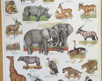 Hobby Poster Chart African Savannah Animals  Poster 27 x 39 made in Italy