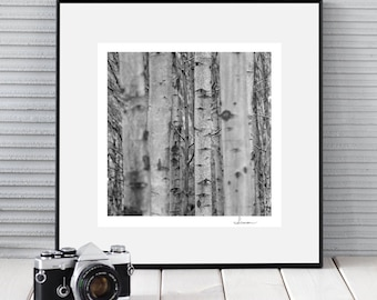 EYES of THE FOREST square black and white art photography nature print forest picture fine art print signed by hand
