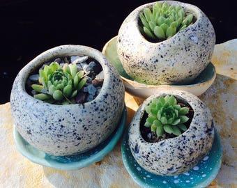 Pebble planter for succulents