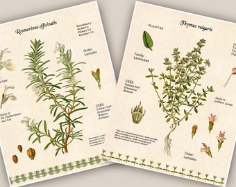 Culinary Herbs print, Kitchen art,Cooking Herb print,Rosemary & Thyme, botanicals, educational poster, Food decor,dining room decor,set of 2