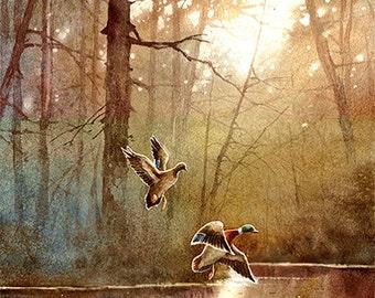 Duck Art Print of Watercolor Painting - Birds, Landscape, Lake