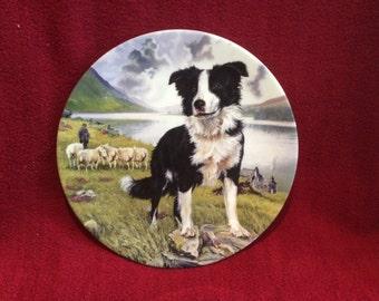 Royal Grafton Tyke, Man's Best Friend Bone China Plate Bradex No. 26-R65-6.1