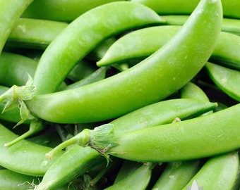 Sugar Snap Pea Heirloom Seeds - Non-GMO, Open Pollinated, Untreated