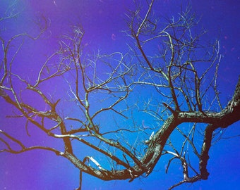Large Photography, Large Blue Art, Dead Tree Art, Vintage Forest Art, Retro Tree Photography, Dead Branches, Large Wall Art Prints, 20x30