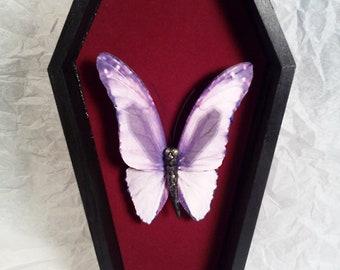 Butterfly  Specimen with Coffin markings Faux Taxidermy
