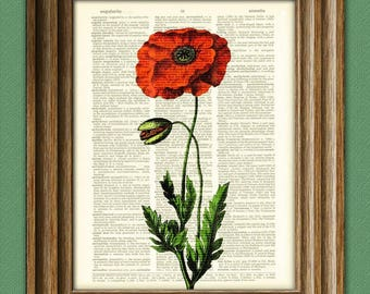 Red Poppy Poppies Flower botanical illustration beautifully upcycled dictionary page book art print