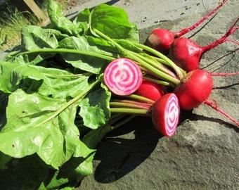 Heirloom Chioggia Beet Vegetable Seed Garden Organic Non Gmo