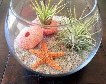 Terrarium Kit, Air Plant Terrarium, Glass Terrarium, Beach Terrarium, Birthday Gift, Desk Warming Gift, Nautical Decor, Airplants, Airplant