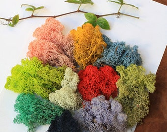 A small pack of dried  Moss,for Filler of the mini glass bottles,stuffing glass globe