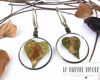 Pendant earrings with ivy leaf-botanical jewellery-real flowers-resin jewelry-for women who love nature