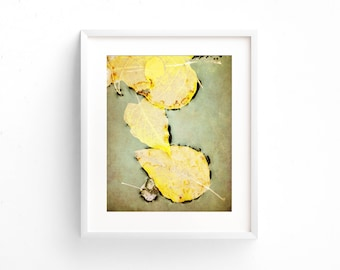 "fall leaves, aspen leaves, yellow leaves, nature, large art, large wall art, farmhouse decor, farmhouse wall art, wall art - ""Three Leaves"""