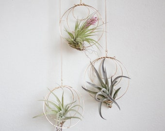 Gardening Gift, Trio of Air Plants Nests, Hanging Airplant Holders, Moon Inspired Wall Decor, Valentines Gift For Scorpio, Gardener, Mom