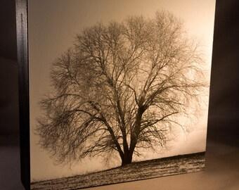 Lone Tree in Winter Photograph 8x8 Wood Panel Original Signed Fine Art Photograph