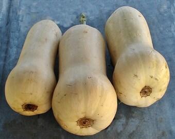 Waltham Butternut Heirloom Winter Squash Seeds Non-GMO Naturally Grown Open Pollinated Gardening