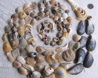 260 Natural Sea Shells Shell Fragments Art Mosaic Craft Supplies (1731)