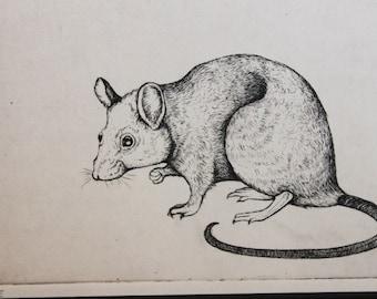 Framed etching of a mouse *Original Art Piece*