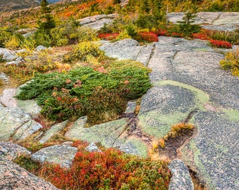 Acadia National Park Photograph - Cadillac Mountain Landscape