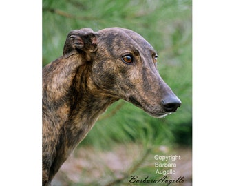 Greyhound Flag, Greyhound Gift, Greyhound Art, Greyhound
