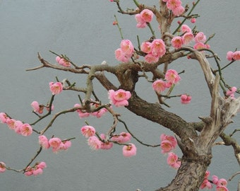 My Heart - Pink Prunus Mume - Wall Decor - Nature Art - Bonsai - Flower  Photograph - Nature Photography - Flower Wall Decor