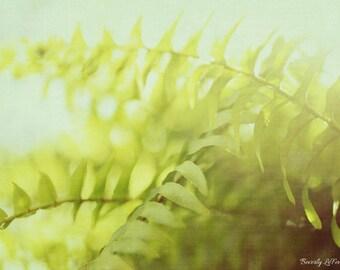 fern, sunlight, plant, summer, nature, fine art photography