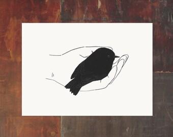 New Zealand Bird Archival Art Print - Black Robin