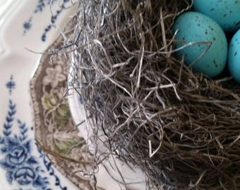 Bird Nest Realistic with Handmade Turquoise Robin's Eggs