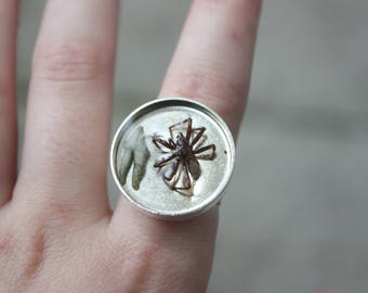 Spider/Tooth Ring.