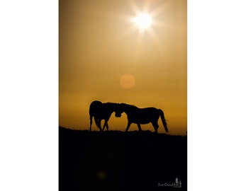 Animal Photography, Two Horses Fine Art, Wild Horse Print, Wall Art Poster, Love Story,  Home Decor, Sunrise Landscape, Color Photography