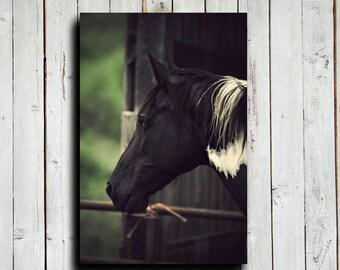 Gazing - Horse Photography - Horse art - Horse Decor - Black and White Paint - Horse canvas - Black Horse - Animal Photography