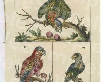 18th Century Hand colored bird vogel copper engraving,decorative art,wall art,home decor,Unterhaltungen aus der Naturgeschichte