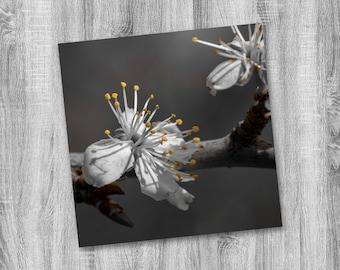 Cherry Blossom Photograph Print - Nature Photo Print - Wall Decor - Square Photography Print - Monochrom - Monochromatic