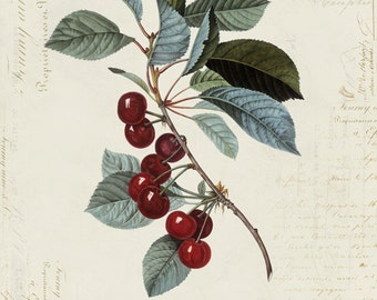 "Vintage Cherry ""Cerise"" on French Ephemera Print 8x10 P154"