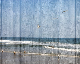 Rustic Home Decor Wall Art Photography, Beach, Seagulls, Costal Rustic Home Decor Matted Picture