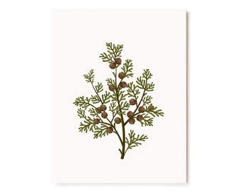 Botanical Scented Card - Hinoki